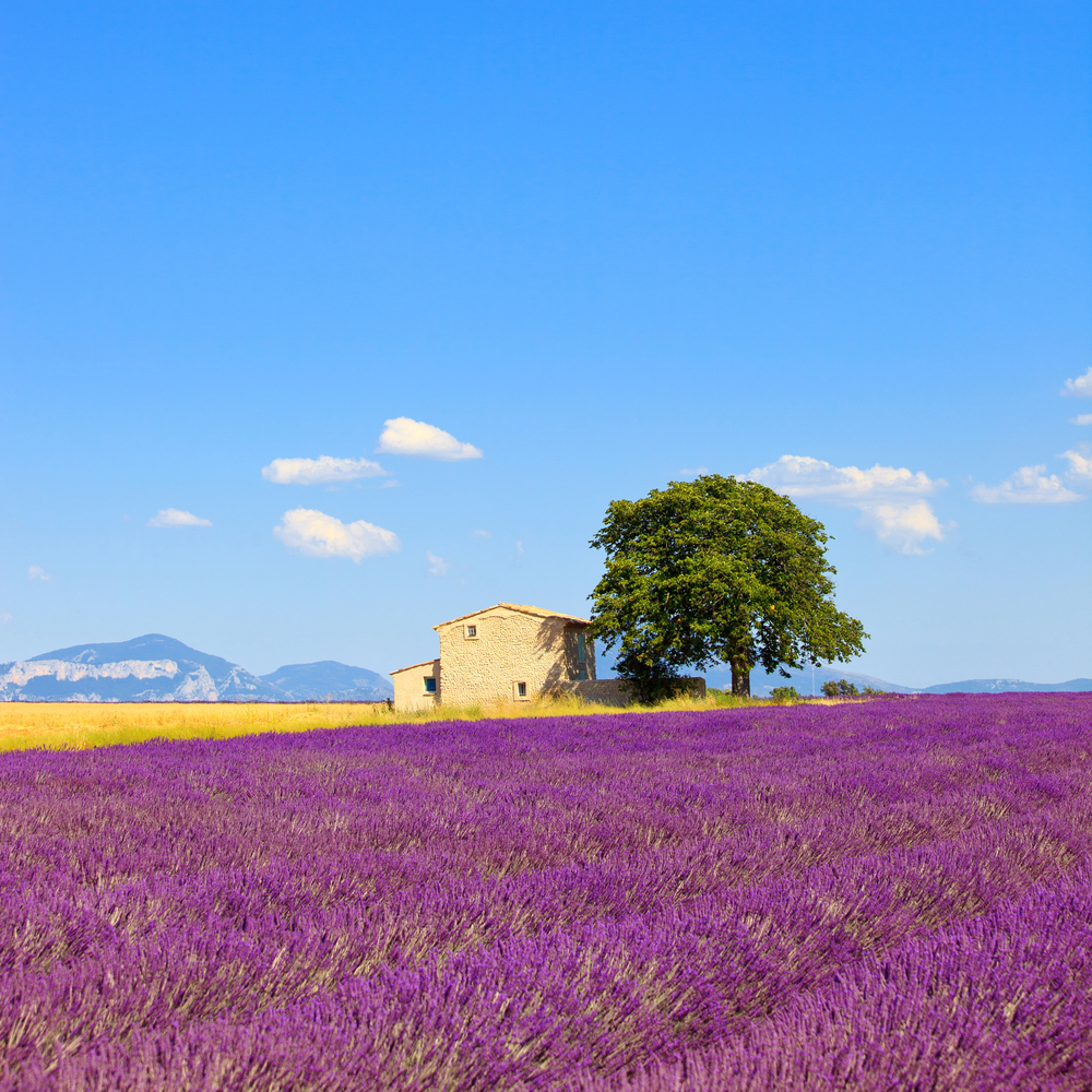 Provence, France Road Trip