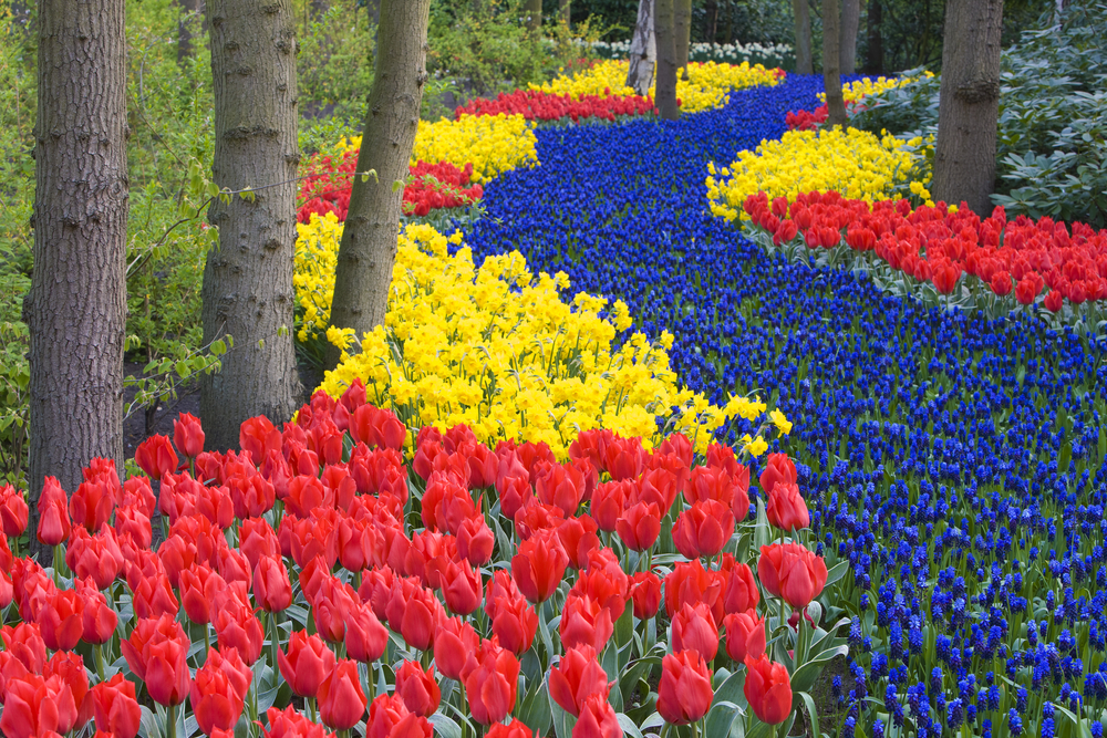 River of Flowers, Keukenhof Gardens