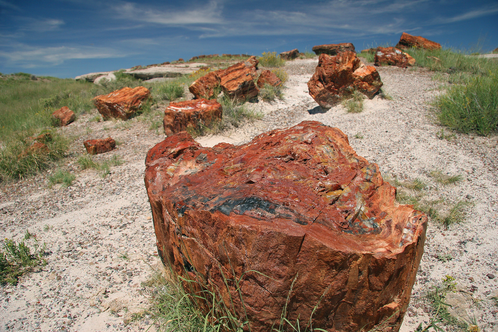Petrified Forest road trip
